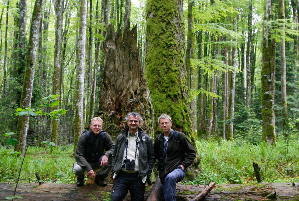 Johan van de Gronden, the CEO of WWF Netherlands (in the middle) with Frans Schepers and Wouter Helmer from Rewilding Europe in the primeval forest of the Velebit rewilding area in June 2012.
