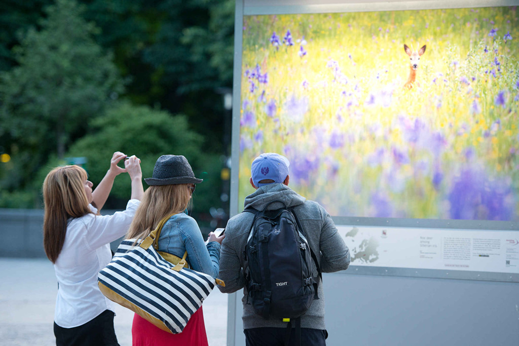 Wild Wonders of Europe outdoor exhibition in Stockholm, Sweden in 2013. Rewilding Europe and the Swedish Postcode Lottery were the main partners.
