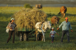 Farming family going home from work in the evening. Lake Prespa National Park, Albania June 2009