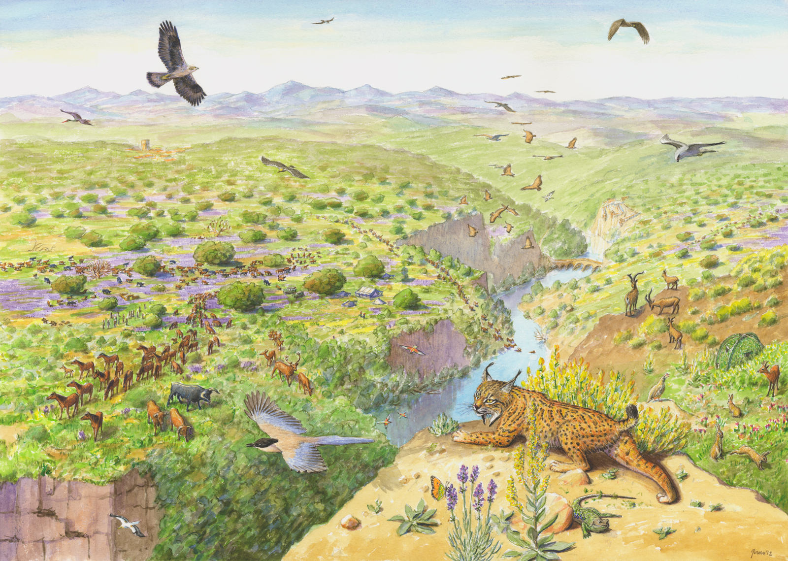 Artist's vision of the Western Iberia rewilding area.