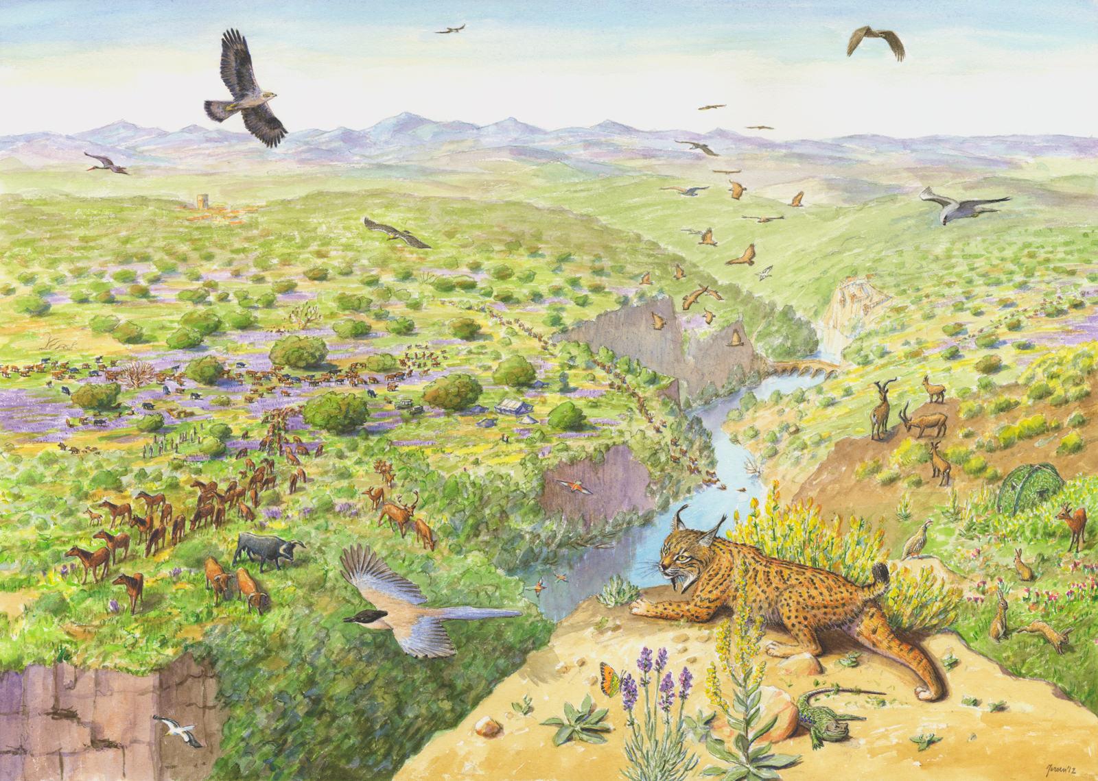 Artist's vision of the Western Iberia rewilding area.
