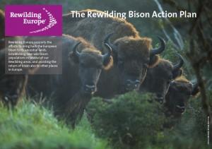 Bison action plan fact sheet