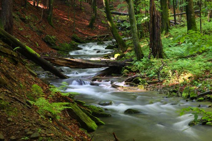 Tworylczyk Stream in Bieszczady National Park