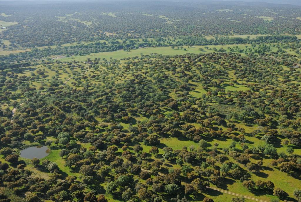 Aerial image Dehesa forest, Salamanca Region, Castilla y León, Spain