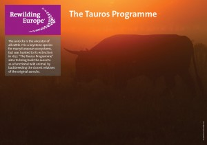 Tauros programme fact sheet