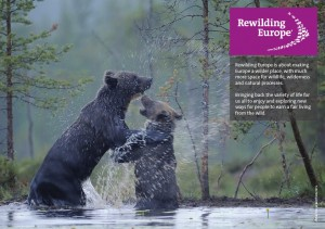 Rewilding Europe executive summary
