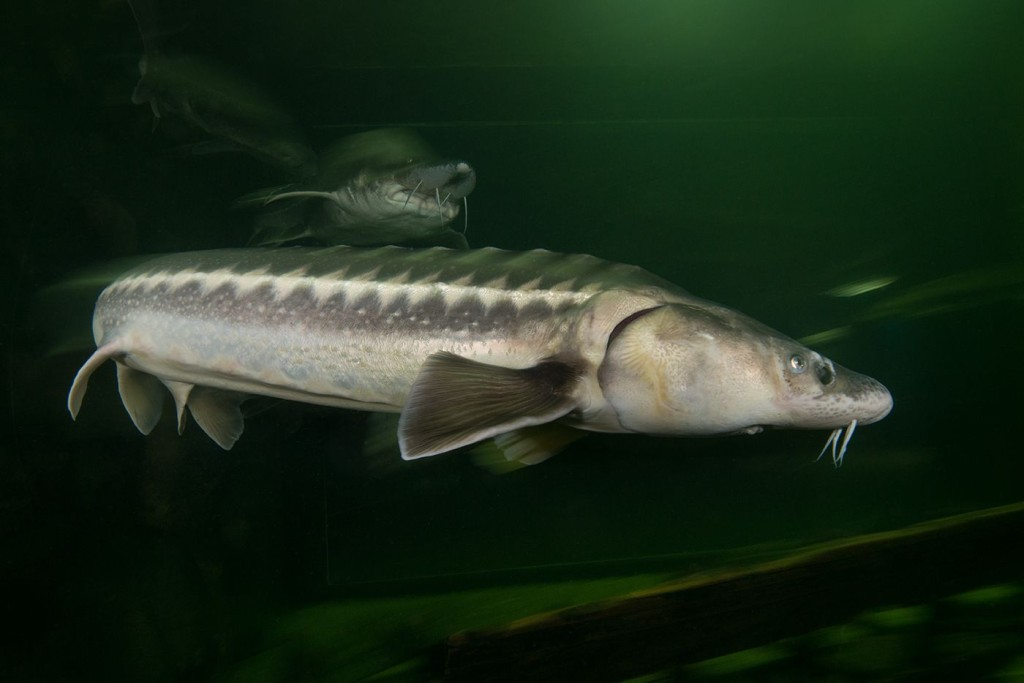Danube Delta mission Rewilding Europe