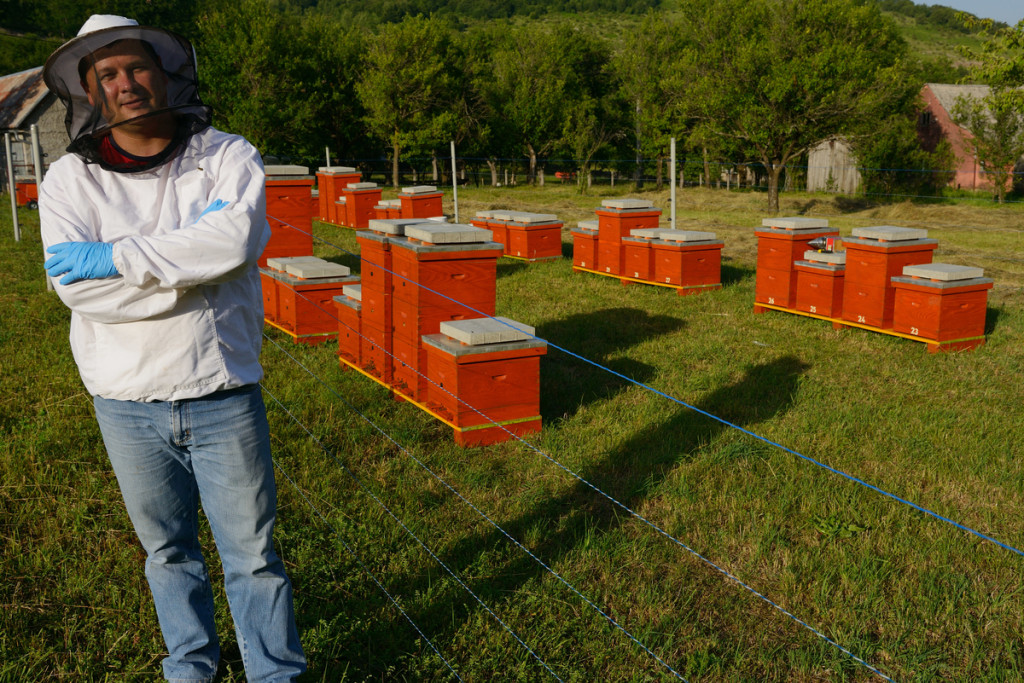 Prize winning bee keeper Sanjin Zarkovic at his bee farm in Melnice, Velebit Nature Park, Rewilding Europe rewilding area, Velebit mountains, Croatia