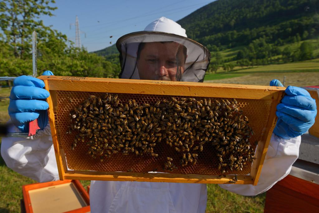 Prize winning bee keeper Sanjin Zarkovic at his bee farm in Melnice, Honey bees, Apis mellifera, Velebit Nature Park, Rewilding Europe rewilding area, Velebit mountains, Croatia