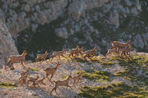 The authors of the article hope the new framework will help catalyse rewilding in European landscapes.