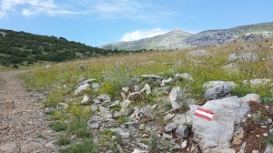 Sveto Brdo, the peak in the background, is a place of pilgrimage for many travelers. One type of trail blaze - a white line sandwiched between two red stripes– is visible in the foreground.