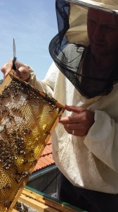Petar at the Knežević family home displaying a beehive frame only a few days shy of harvest.