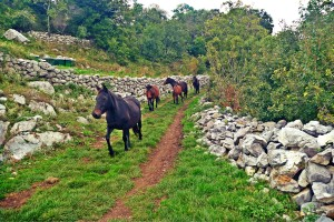 The mountain horses evolved over centuries in the Balkan region.