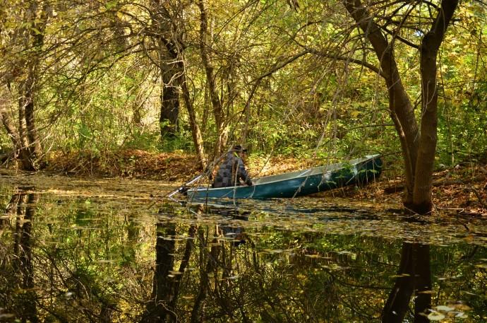 Monitoring beavers in the Danube Delta.