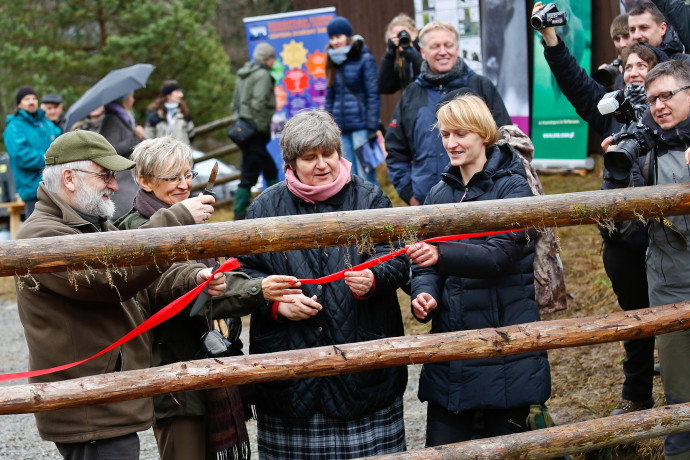 The gate of the bison enclosure was lifted at a special release ceremony.