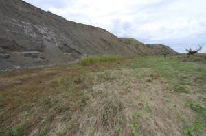 One of the 'buffalo cliffs' along Telegraph Creek, where many bison lost their lives during excessive hunting in the 19th century