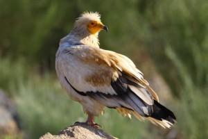 In the Faia Brava reserve where wildlife makes a comeback.