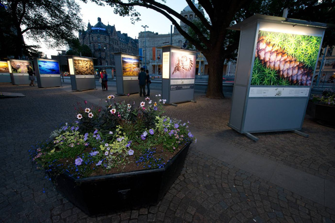 Wild Wonders of Europe outdoor exhibition in Stockholm