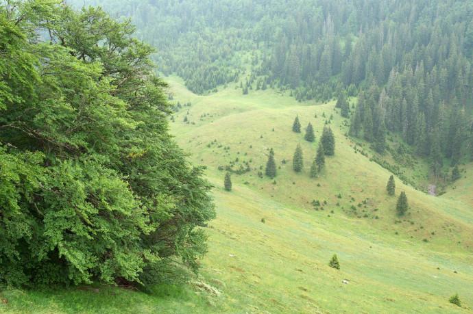 Abandoned grazing lands in the Velebit Nature Park, Croatia