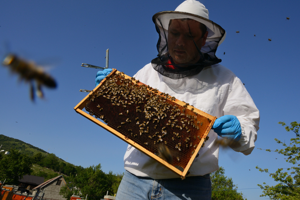 Prize-winning bee keeper Sanjin Žarković at his apiary in Melnice, located in the Velebit Mountain rewilding area in Croatia.