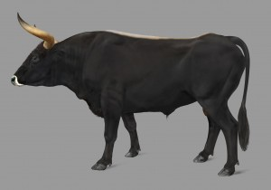 Drawing of the aurochs, ancestor of all cattle and the largest and heaviest land mammal in Europe.