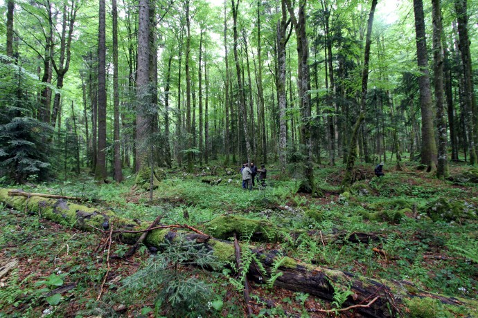 Fieldwork by project team members from Rewilding Europe, Rewilding Velebit and Faculty of Forestry in the old-growth forest Klepina Duliba, Velebit rewilding landscape, Croatia.