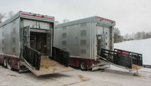 Trucks picking up the horses from Latvia
