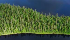 Peat bog lands and taiga boreal forest, Sjaunja Bird Protection Area, Lapland, Sweden.