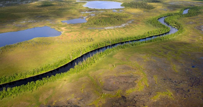 Several wildest rivers of Europe and home to some of the last original wild salmon populations of the continent are located in Lapland rewilding area in northern Sweden.