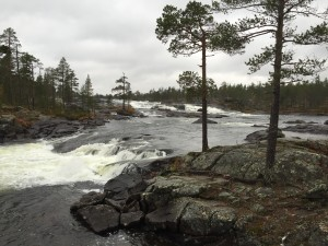 Rewilding Lapland in cooperation with the local association for the Pite River (Pite Älv Ekonomisk Förening) plans to restore a 9 km long part of the Pite River near the spectacular waterfalls of Trollforsen.
