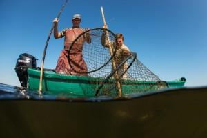 Traditional fishing, fisherman checking the fyke nets, Danube Delta rewilding landscape, Romania.