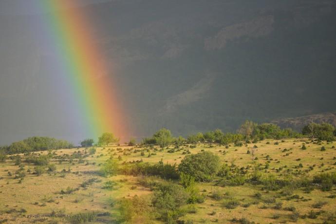 Rainbow on a grazed landscape, grazed by Fallow deer, Dama dama, Rhodope Mountains, Bulgaria.