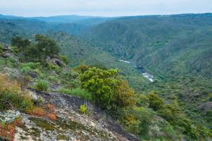 Breathtaking Côa Valley, Western Iberia rewilding landscape, Portugal.