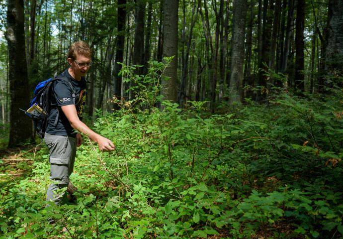 Nick Huisman, Rewilding Europe's intern, searching for European bison tracks in Southern Carpathians rewilding area, Romania.