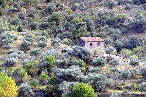 Abandoned house selected for restoration work in Ribeira do Mosteiro nature reserve.
