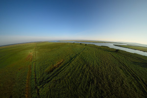 Large areas of mowed grassland in the Oder Delta rewilding area.