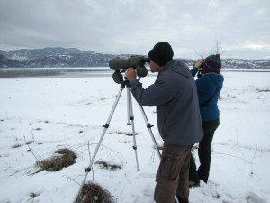 Rewilding Rhodopes and BSPB teams, bird watching during the mid-winter waterfowl census.