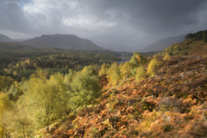 Glen Affric is one area in the Scottish Highlands that has been extensively rewilded in recent decades.