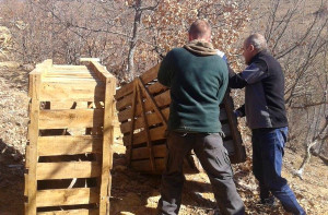 Rhodope Mountains rewilding team releasing red deer into the rewilding area in Bulgaria.