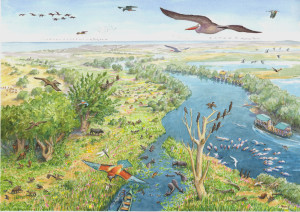 Our vision of the Danube Delta as one of the most well-protected and famous wildlife areas in Europe.