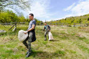 Bison rangers in the Southern Carpathians bring supplementary food for newly transported bison in their acclimatisation enclosure.
