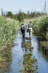 Hiking in Anklam wetlands on the German side of the Oder Delta rewilding area.