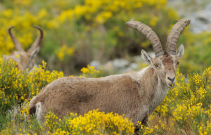 At Rewilding Europe, we trust in nature to take care of itself. If we intervene, it is to enable key ecological processes to reshape the landscape.