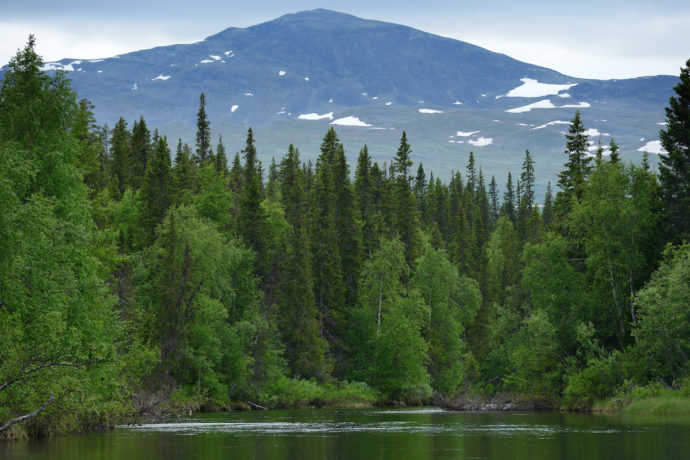 Lapland is one of the world's most underrated wildlife watching destinations, with fantastic potential for the development of a nature and culture-based economy.