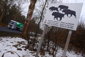 Road sign alerting drivers about European bison in Drawsko region, Western Pomerania, Poland.