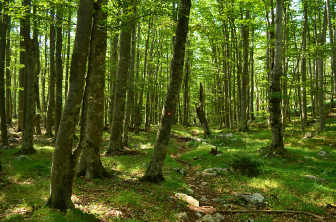 The Velebit hiking route passes through the Ramino Korito old-growth forest.
