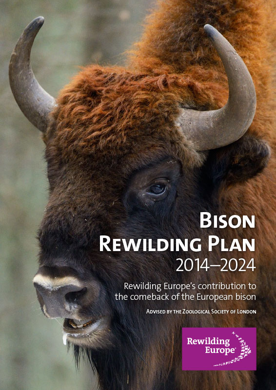 Bison Rewilding Plan | Rewilding Europe