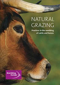 """The publication """"Natural Grazing – Practices in the rewilding of cattle and horses"""" was published by Rewilding Europe in 2015."""