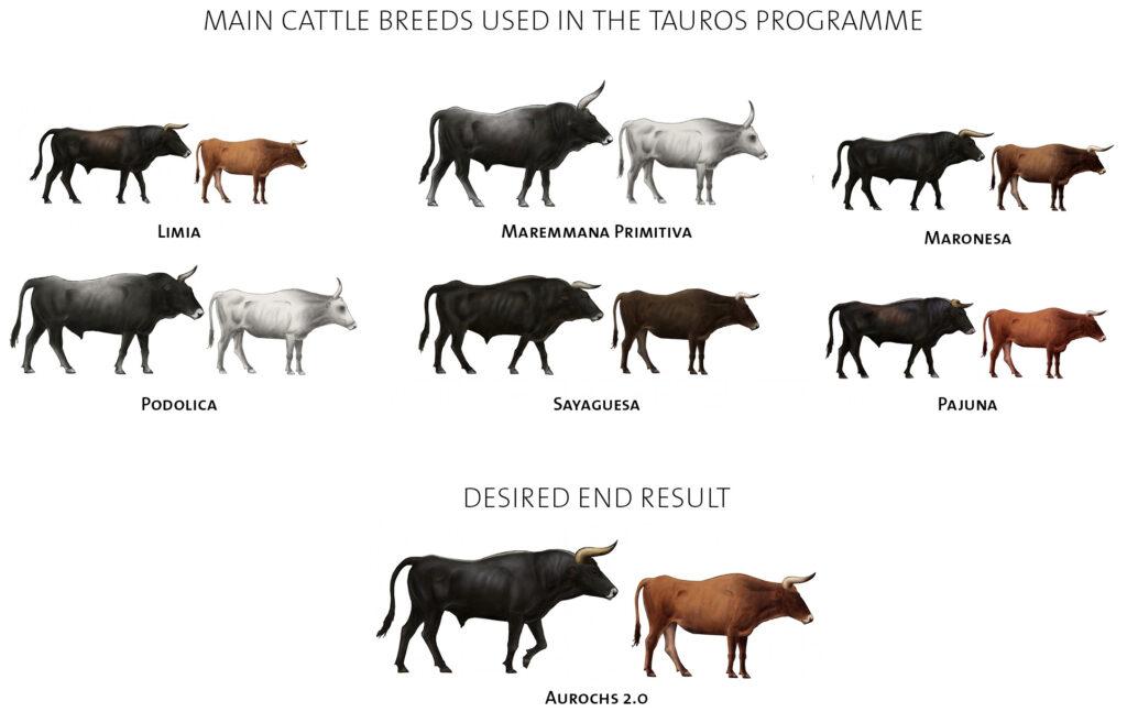 https://rewildingeurope.com/wp-content/uploads/2017/11/cattle-breeds-2-1024x647.jpg