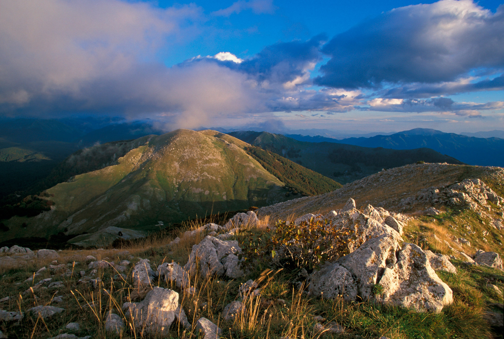The Rewilding Apennines team, together with their new partner Salviamo l'Orso, will work together on rewilding, wildlife comeback and the building of a local nature-based economy.